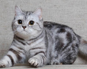 ухаживать за котенком
