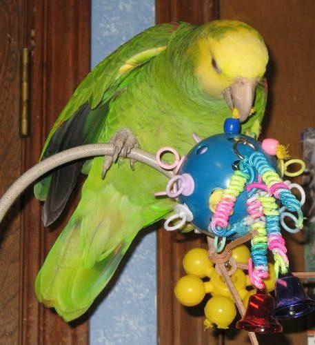 ухаживать за попугаем